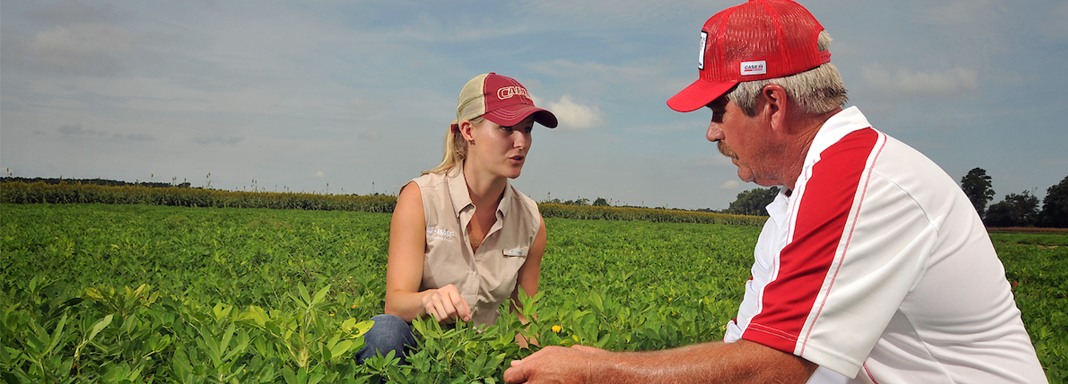 woman and man studying peanut field plants